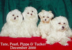Tate, Pearl, Pippa and Tucker